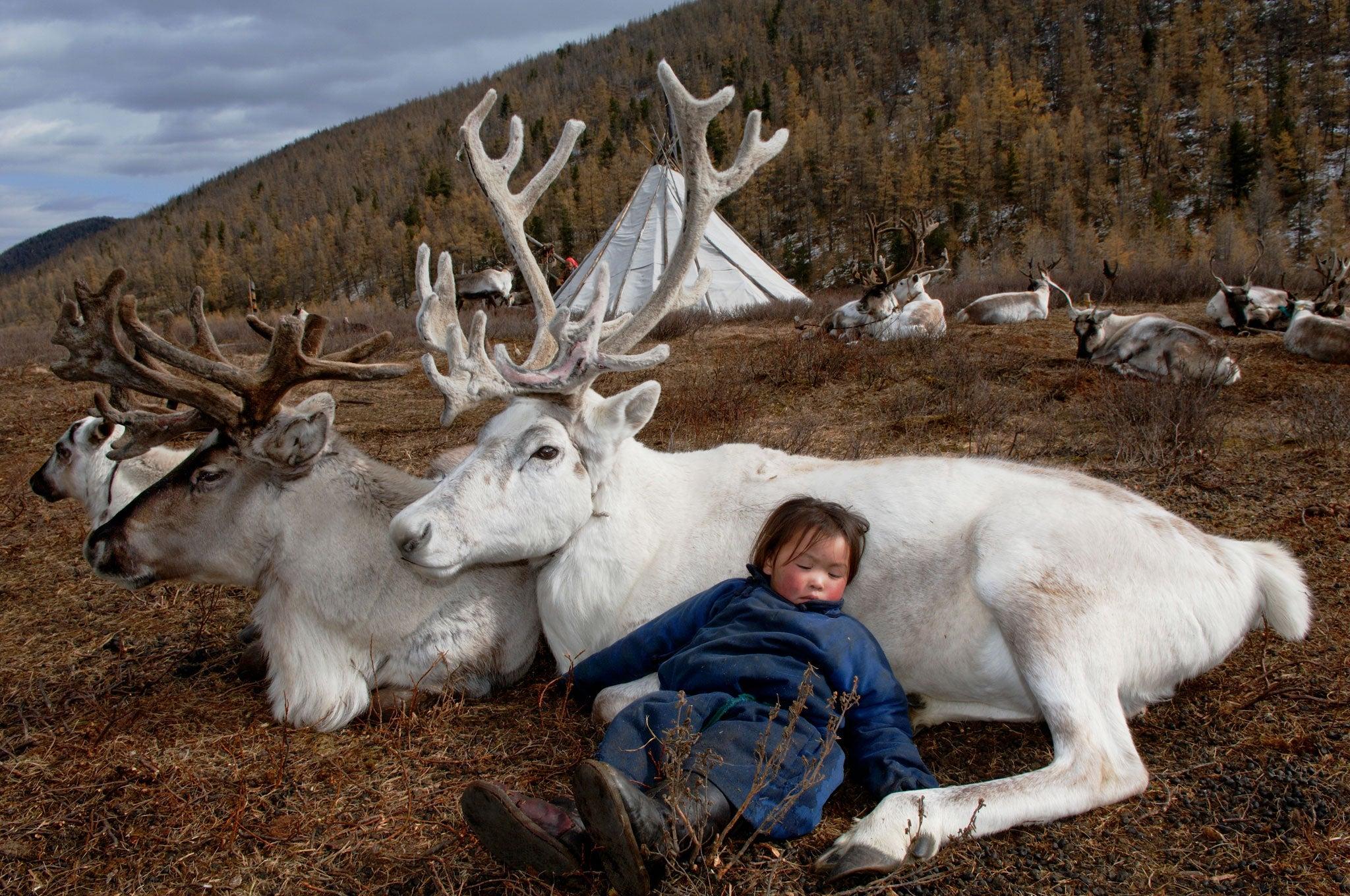 mongolia tribal life