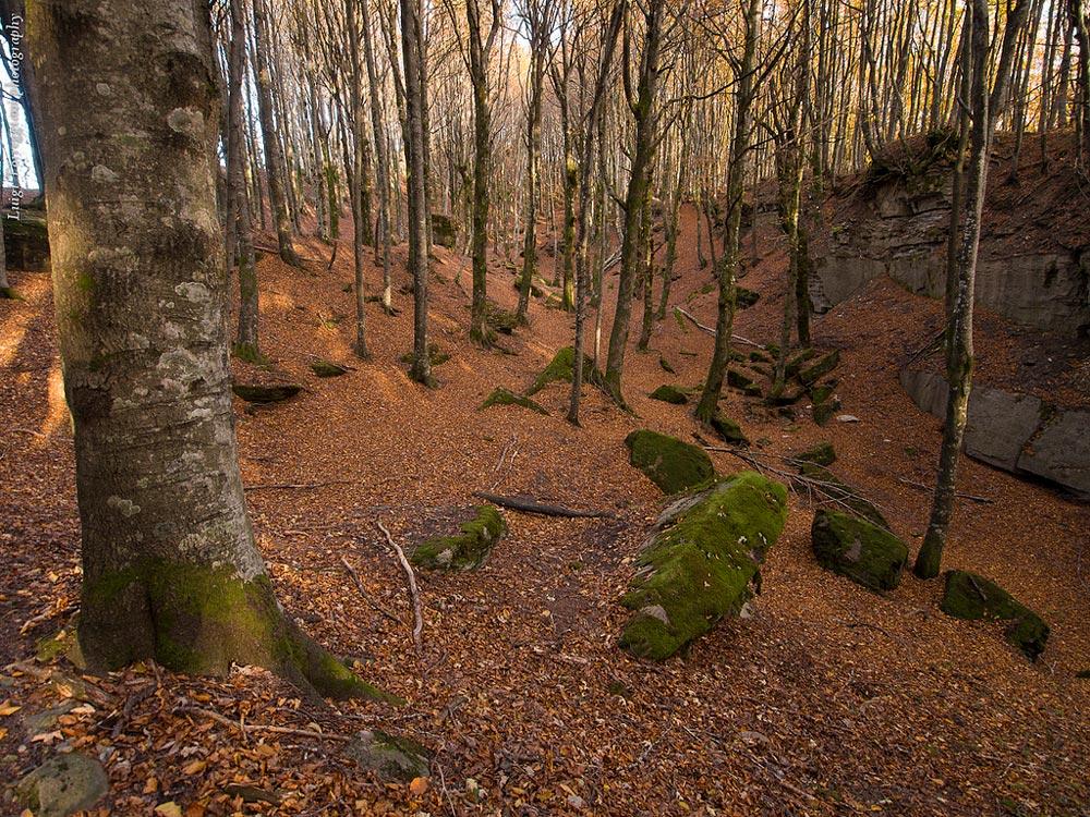 Foreste-Casentinesi National Park